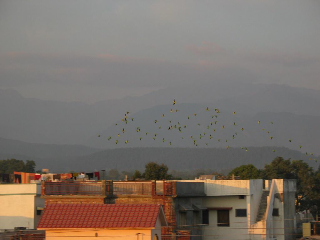 Dehradun Parrots