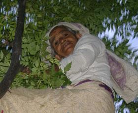 Sudesha Devi